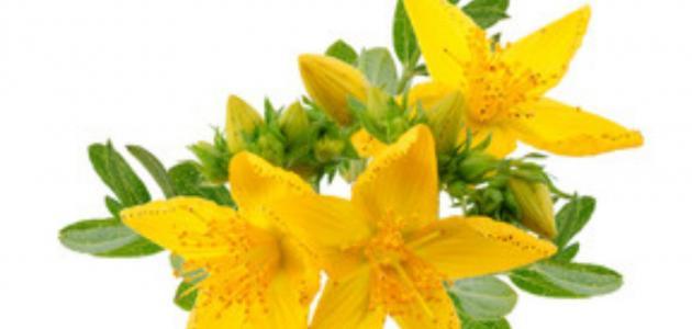 5 أعشاب تكافح الاكتئاب