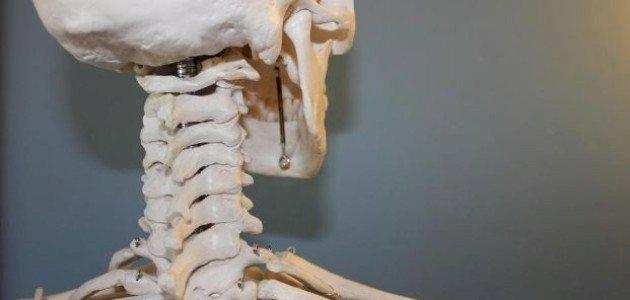 ما هو عدد العظام في جسم الإنسان؟