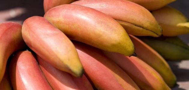 ما هي فوائد الموز الأحمر؟