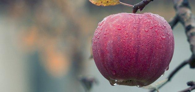 ما هي فوائد الأغذية العضوية؟