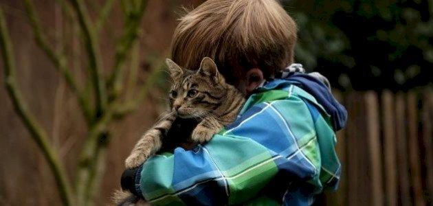 ماذا تعرف عن مرض خدش القط؟