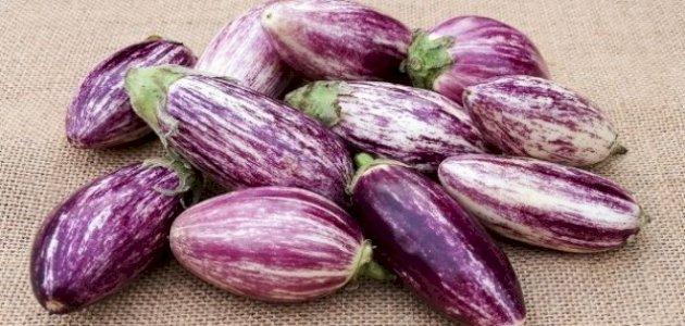 الخضراوات الباذنجانية: هل هي ضارة لصحتك؟