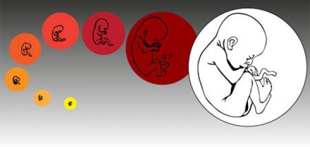 علامات معرفة نوع الجنين