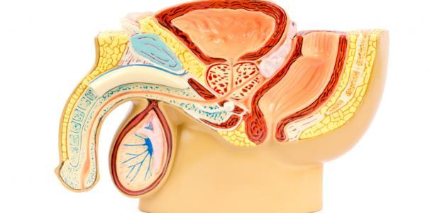 تضخم البروستاتا وعلاجها