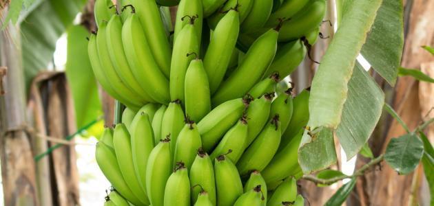 فيتامين الموز