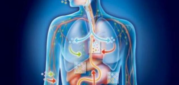 معلومات صحية عن جسم الانسان