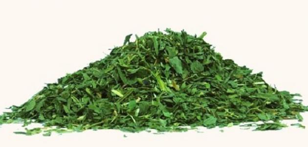 ما علاج ضيق التنفس بالاعشاب
